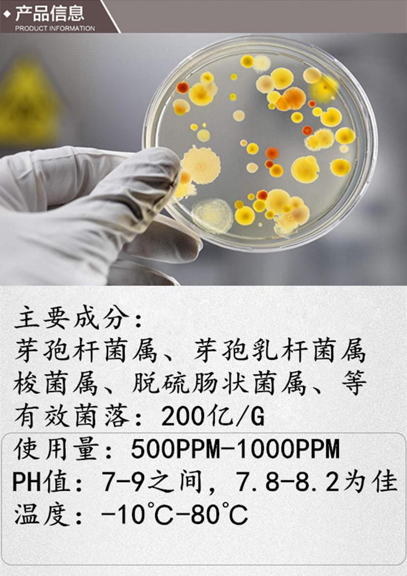 生物菌种 黑臭水体治理 去除氨氮COD 河道治理专用菌种 全程售后服务 免费技术指导 开碧源欢迎您的光临示例图3