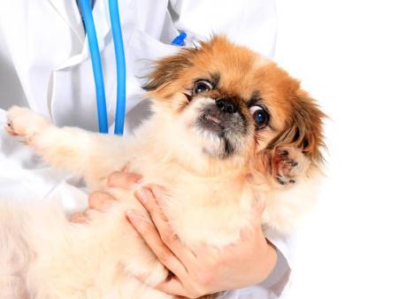 宠物手术-朝阳有可信赖的宠物手术