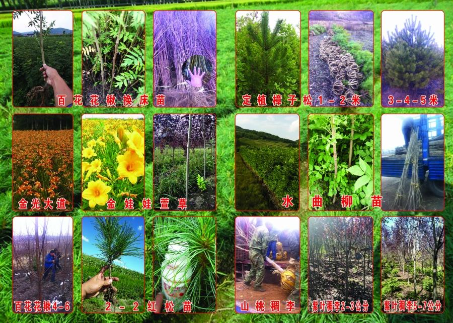 吉林|办公绿化