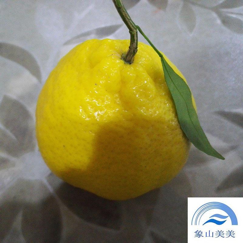 象山绿美人柑橘苗木 ,果实光滑,有香气,风味浓郁,耐贮藏