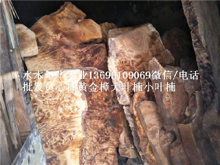 缅甸黄金樟板子原木山香果大板树板 留疤板  电话微信
