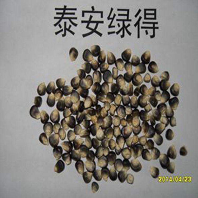 能釀酒用的黑玉米 黑包谷酒原材料黑糯玉米 雲南曲靖黑玉米酒 黑包谷酒示例圖1