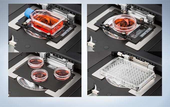 奥林巴斯倒置显微镜CKX53示例图11