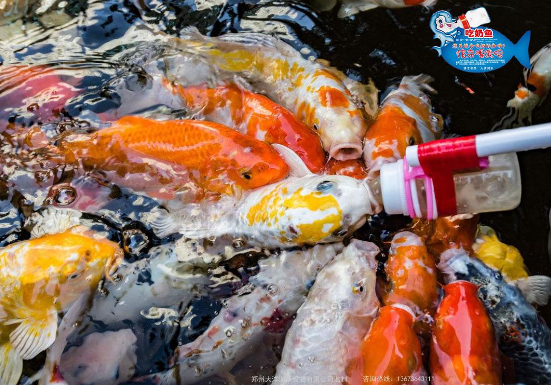 河南 郑州2020 吃奶鱼 游乐设施  儿童吃奶鱼设施厂家 批发价格示例图19