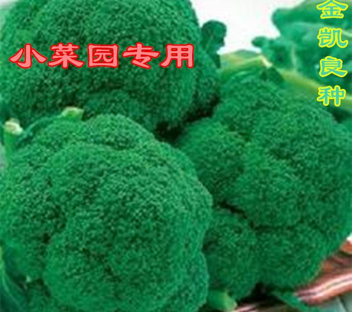 花椰菜、绿花椰菜、西兰花、西兰花种子、夏秋盆栽蔬菜种植在阳台上