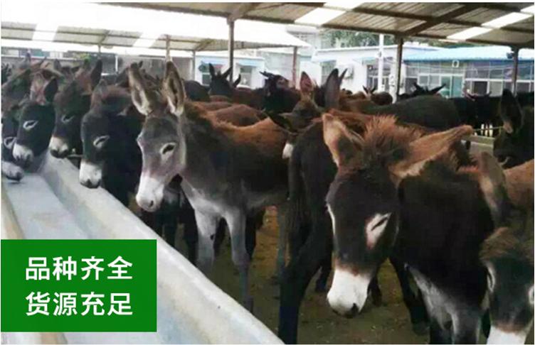 山东肉驴 专业养殖肉驴,好品质肉驴专业养殖肉驴厂家 肉驴厂家直销,肉驴量大优惠示例图2