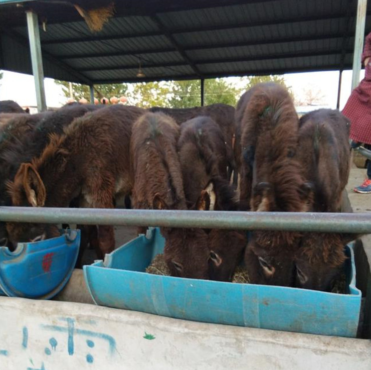 山东肉驴 专业养殖肉驴,好品质肉驴专业养殖肉驴厂家 肉驴厂家直销,肉驴量大优惠示例图10