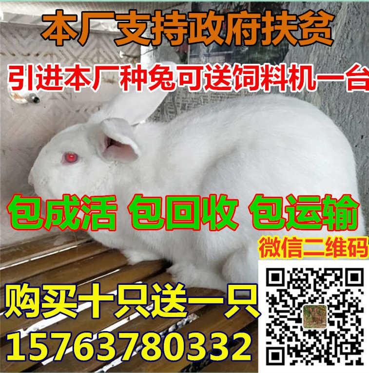 02150c252fdc54bdc52ff261ae8c010.jpg