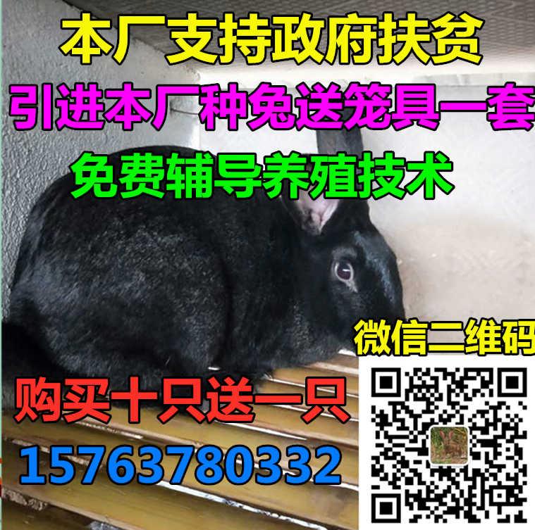 571bb8080392e8a0ed521063375b8cd.jpg