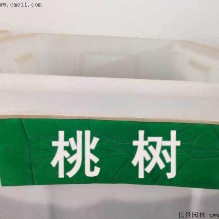 桃树种子批发零售    低价批发  便宜质量好