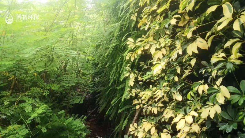 模块式种植盒 垂直绿化 立体绿化 生态植物墙,智能植物墙,植物墙种植盒,博智环保示例图7