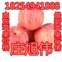 山西紅富士蘋果,山東紅富士蘋果,陜西紅富士蘋果,今日蘋果價格,今年蘋果行情