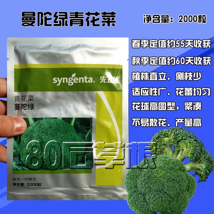 10g曼托绿花椰菜种子西兰花种子先正达种子