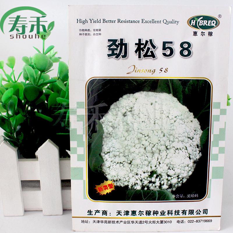 劲松58花椰菜种子绿茎花椰菜秋季早熟有机花椰菜高产花椰菜