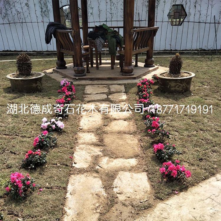 2018年汀步石景墙石批发庭院铺路石示例图14