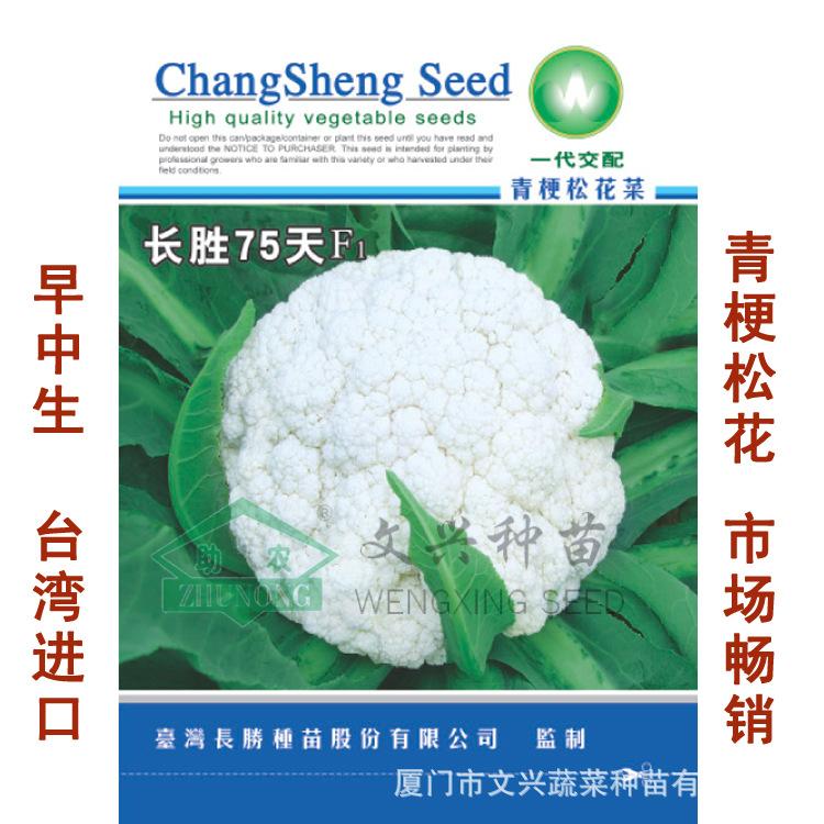 松花种子长盛75天生绿茎有机高产优质厦门文献