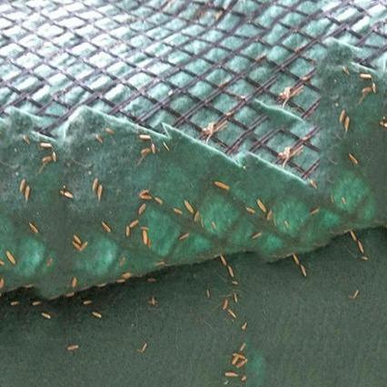 生產抗沖生物毯  品質可靠  歡迎訂購 濰坊綠源廠家直銷