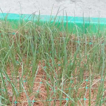 加工生產椰網  椰纖維網 品質可靠  歡迎訂購 v濰坊綠源