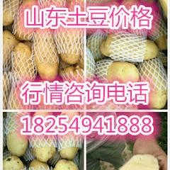 山東土豆價格,山東荷蘭十五土豆價格,土豆批發價格